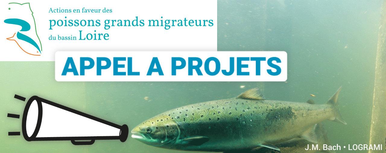 Image d'illustration pour faire un lien vers l'appel à projets recherche, expérimentation et valorisation des connaissances sur les populations de poissons migrateurs amphialins sur le bassin de la Loire - 2021